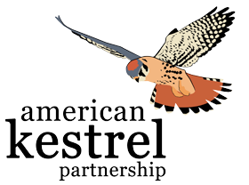 American Kestrel Program – Dec. 15 at Ivy Creek