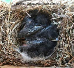 2017 Bluebird Nesting Trail Report