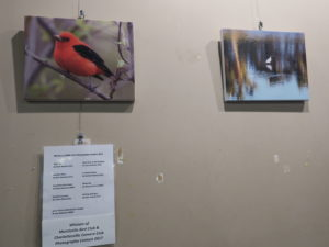 Photo Contest 2017 Winners on Display at C'ville Coffee